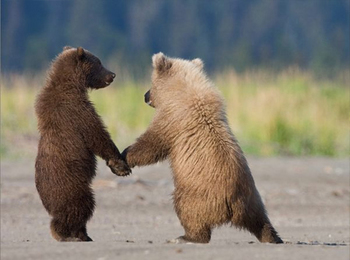 grizzly-bear-cubs-ga.jpg